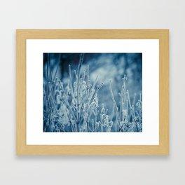 Frosty Morning  Framed Art Print