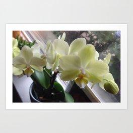 Yellow Orchid  Art Print