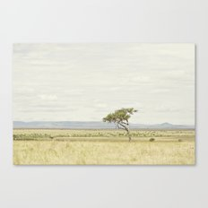 tree of life::kenya Canvas Print