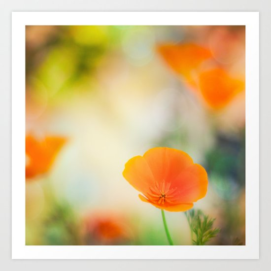Poppy Rainbow Art Print