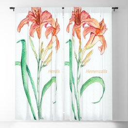 Hemerocallis (Day Lily) Blackout Curtain