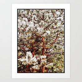 Snow Covered Pine Tree's Art Print