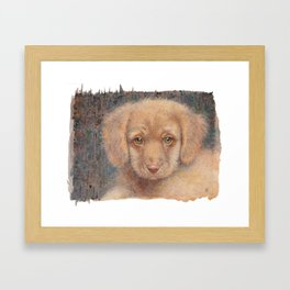 Retriever puppy Framed Art Print