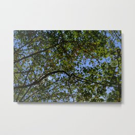 The sound of the tree Metal Print