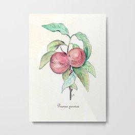 Prunus Persica (Peach) Metal Print