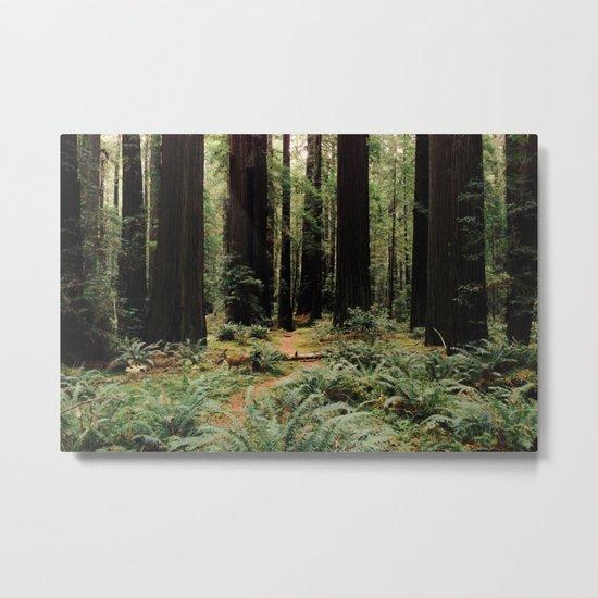Deer in Redwood Forest Metal Print