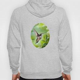 Hummingbird Love Hoody