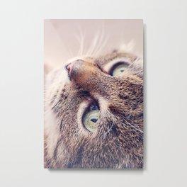 Sweet Lissy Lovecat Metal Print
