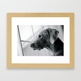 Weim Ar Aner  Framed Art Print
