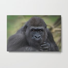 Gorilla Youngster Metal Print