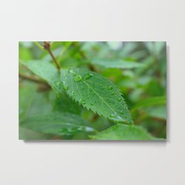 Leaf With Raindrops Metal Print