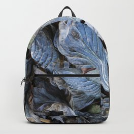 The Nature of Leaves - a Midwest Winter Backpack