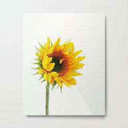 Yellow Provincetown Sunflower Metal Print
