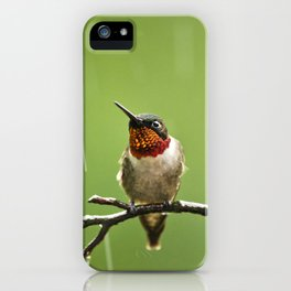 Hummingbird XIII iPhone Case