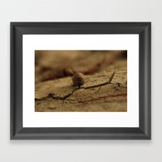 Drought, and life Framed Art Print