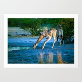 First drink of the morning Art Print