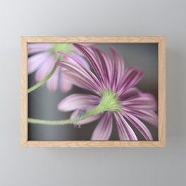 Beautiful Daisies - Daisy Flower Stripes in Pink and Purple Framed Mini Art Print