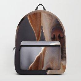 Portrait of A Golden Labrador Retriever Backpack