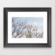 Winter Beauty Framed Art Print