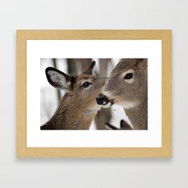 Chevreuil 004  Framed Art Print