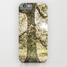 Snow tree Greenwich Park London Slim Case iPhone 6s