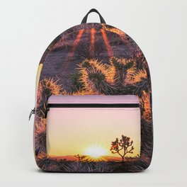 Joshua Tree National Park Cholla Cactus Sunset Sun flare (warm tones) Backpack