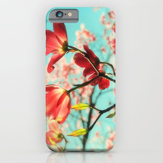 Spring dogwood blossoms iPhone & iPod Case