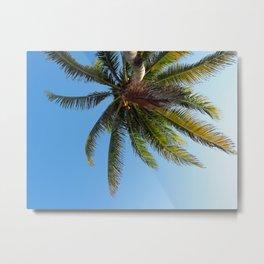 Palm Tree Akumal Beach Metal Print