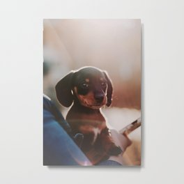 Dog by Elijah M. Henderson Metal Print