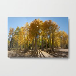 Autumn Blaze outside of Crested Butte, Colorado for #Society6 Metal Print