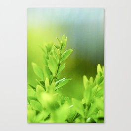 Green Harmony Canvas Print