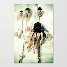 Dying Beauty Canvas Print