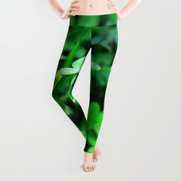 Clover Stay Leggings