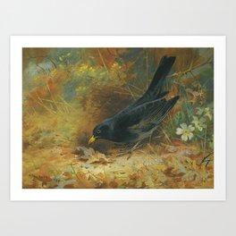 Archibald Thorburn (Scottish, 1860 - 1935) Blackbird, 1928 Art Print