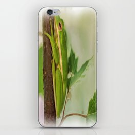 Painted Green Tree Frog iPhone Skin