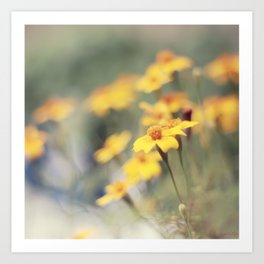 Orange zest Art Print