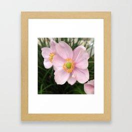 Pretty in pink Poppy Flower  Framed Art Print