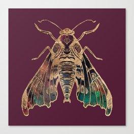 Sphinx Moth Canvas Print