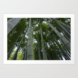 Bambu forest Art Print