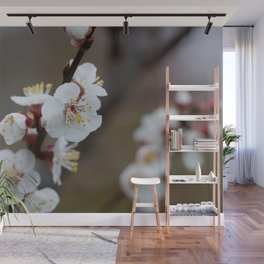 Apricot Blossom Wall Mural