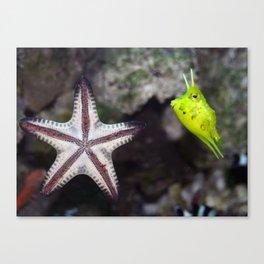 Starfish and Cowfish Photograph Canvas Print