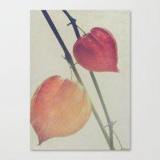 Autumn Botanical, Chinese Lantern - Physalis alkekengi Canvas Print