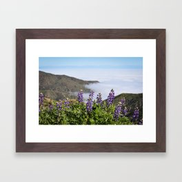 Catalina Lupines Framed Art Print