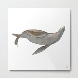 Happy Sea Lion Swimming Metal Print