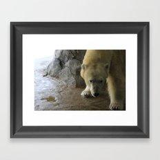 Anana the Polar Bear   Framed Art Print