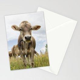 Brown Swiss Heifer Stationery Cards