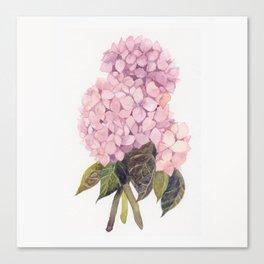 watercolor pink hydrangea Canvas Print