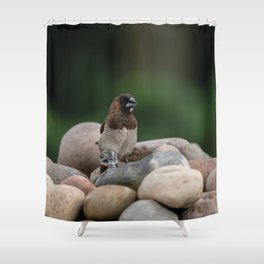 Bengalese Finch Shower Curtain