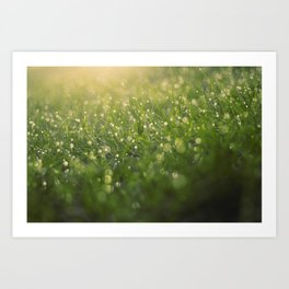 Dew on a Sunday Morning Art Print