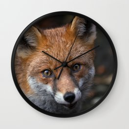 Wild Red Fox Looking At You Wall Clock